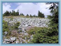 Steinmeer unter dem Gipfel von Králický Sněžník
