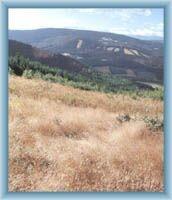 Anblick auf den Gebirgskamm von Orlík vom Gipfel des Bergs Bischofskoppe