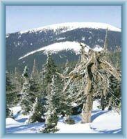 Winteranblick auf den Berg Králický Sněžník