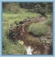 Bach Žlutý potok im Torfgrund Na Skřítku