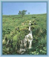 Quelle des Flusses Moravice in Velká kotlina