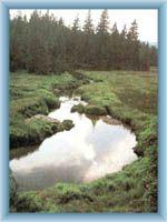 Torfmoor Malá jizerská louka