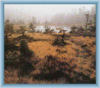 Torfmoor Na čihadle