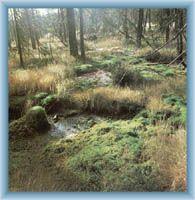 Torfmoor Velká jizerská louka