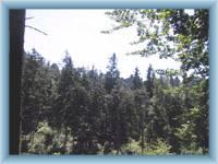 Gipfel von Felsen Jiráskovy skály im Wald